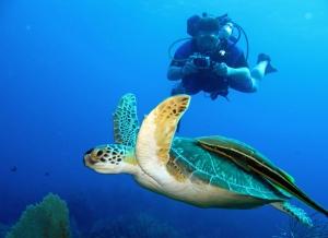 Scuba-diving-Playas-del-Coco-Beach